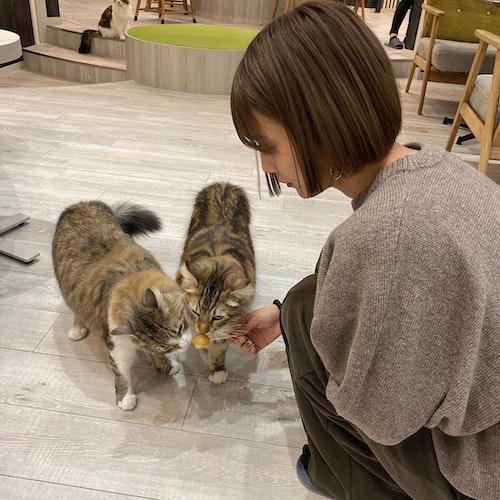 猫カフェショット